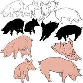 Pig Collection — Stock Vector