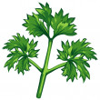 Parsley — Stock Vector
