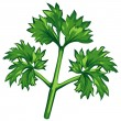Parsley — Stock Vector #3279908