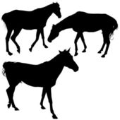 Horse Silhouette Collection — Stock Vector