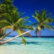 Tropical Paradise at Maldives — Stockfoto