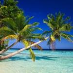 paraíso tropical en Maldivas — Foto de Stock