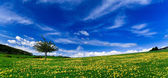 Spring landscape - green fields — Stock Photo
