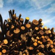 Pile of logs — Stock Photo #2869715