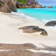 Mega caribical beach — Stock Photo