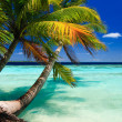 Tropical Paradise at Maldives — Stock Photo #3035829