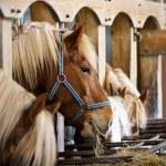 Horses — Stock Photo #3079796