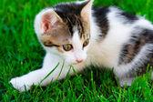 Little Kitten in the green gras — Stock Photo