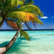 Tropical Paradise at Maldives — Stock Photo #3106930