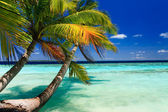 Tropical Paradise at Maldives — Stock Photo