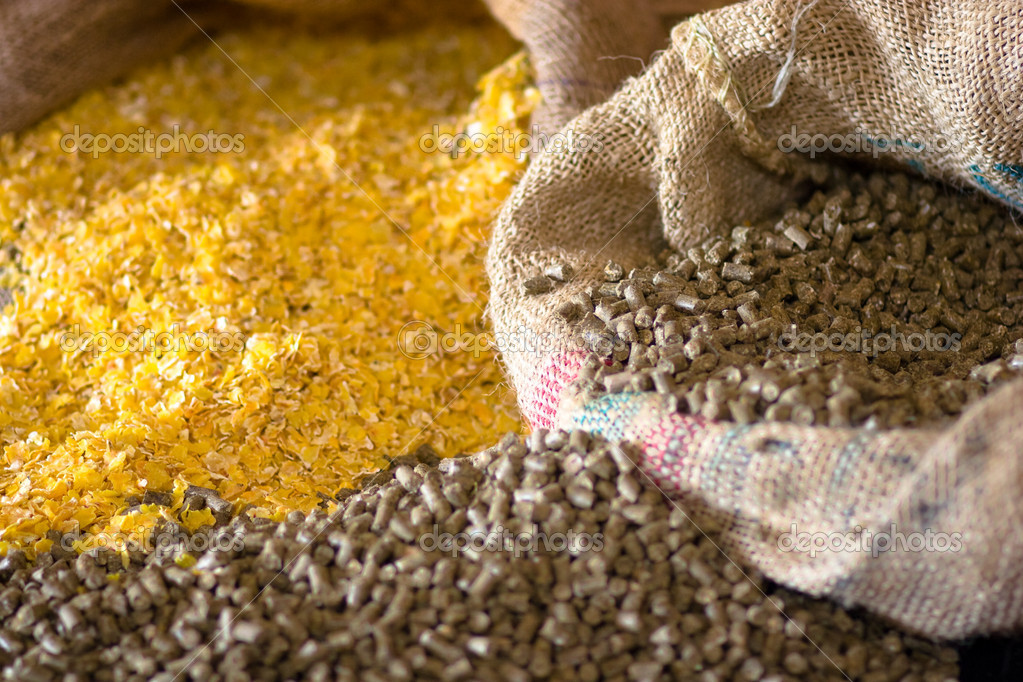 Animal corn food  Stock Photo #3106529