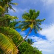 Tropical Paradise at Maldives - Stock Photo