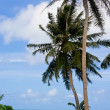 Boad, palms and sea — Stock Photo