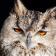 Stock Photo: Royal owl - Bubo Bubo