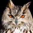Royal owl - Bubo Bubo — Stock Photo