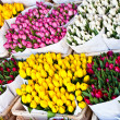 Stock Photo: Amsterdam flowers market