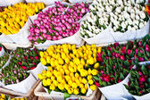 Amsterdam flowers market — Stock Photo