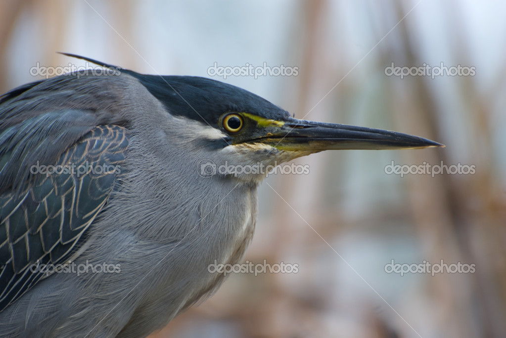 Bird's head and beak - stock image