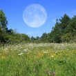 Stock Photo: Meadow With Moon