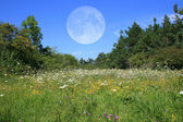 Meadow With Moon — Stock Photo