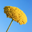 Stock Photo: Yellow Flower