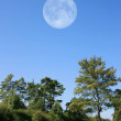 Trees with Moon — Stock Photo