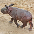 Stock Photo: Rhino Baby