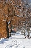 Way in Winter — Stock Photo