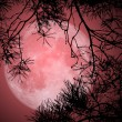 Full Moon Night — Stock Photo