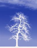 White Tree — Stock Photo