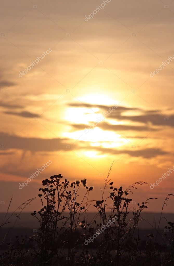 This image shows plants in the evening sun — Stock Photo #2978142