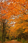 Autumn Forest Track — Stock Photo
