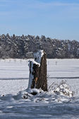 Stump in Winter — Stock Photo