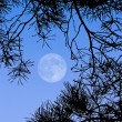 Full Moon — Stock Photo #3080481