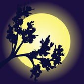 Branch silhouette in moon's light — Stock Photo