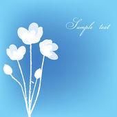 用白色鲜花贺卡 — 图库照片