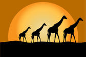 Giraffes in savana — Stock Photo