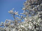Spring. — Stockfoto