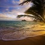Pacific sunrise through the palms — Stock Photo
