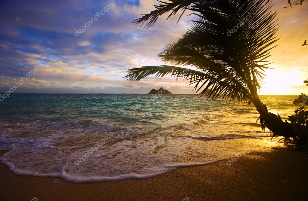 Pacific sunrise through the palms at lanikai beach, hawaii — Stock Photo #2853707