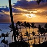 Sunset through palms — Stock Photo