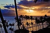 Puesta del sol a través de las palmas — Foto de Stock
