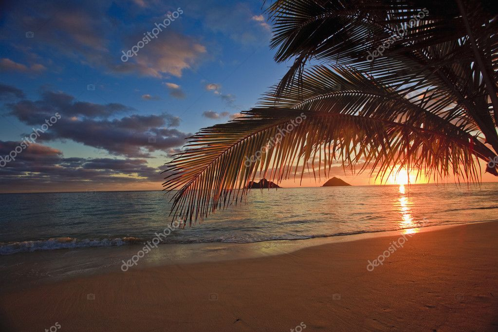 Sunrise through the palms at lanikai beach, hawaii — Stock Photo #2863393