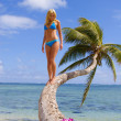 Beautiful young woman standing on a coconut palm - Стоковая фотография