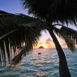 Pacific sunrise through the coconut palms — Stock Photo #3670091