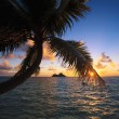 Stock Photo: Pacific sunrise through the coconut palms