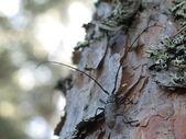 Bark bug on the tree — Stock Photo