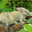 Stock Photo: Little rabbits on stump