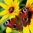 Butterfly, flying from flower — Stock Photo #2865025