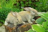 Little rabbits on the stump — Stock Photo